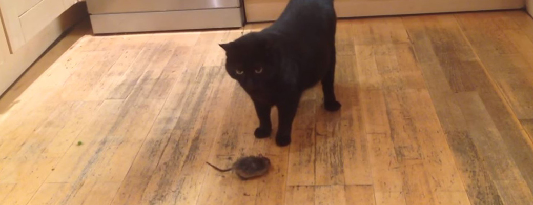 What If A Salem House Mouse Got Inside My House